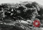 Image of annual wild horse round up Hayward California USA, 1930, second 13 stock footage video 65675032154