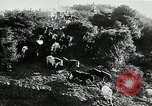 Image of annual wild horse round up Hayward California USA, 1930, second 14 stock footage video 65675032154