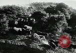 Image of annual wild horse round up Hayward California USA, 1930, second 15 stock footage video 65675032154