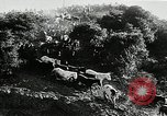 Image of annual wild horse round up Hayward California USA, 1930, second 16 stock footage video 65675032154