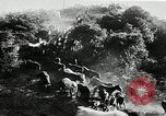 Image of annual wild horse round up Hayward California USA, 1930, second 20 stock footage video 65675032154
