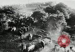 Image of annual wild horse round up Hayward California USA, 1930, second 21 stock footage video 65675032154