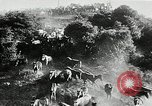 Image of annual wild horse round up Hayward California USA, 1930, second 22 stock footage video 65675032154