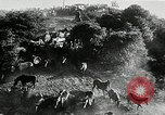 Image of annual wild horse round up Hayward California USA, 1930, second 23 stock footage video 65675032154