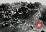 Image of annual wild horse round up Hayward California USA, 1930, second 24 stock footage video 65675032154