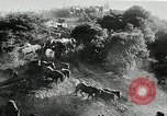 Image of annual wild horse round up Hayward California USA, 1930, second 25 stock footage video 65675032154