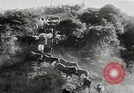 Image of annual wild horse round up Hayward California USA, 1930, second 26 stock footage video 65675032154
