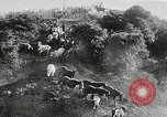 Image of annual wild horse round up Hayward California USA, 1930, second 27 stock footage video 65675032154