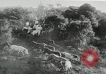 Image of annual wild horse round up Hayward California USA, 1930, second 31 stock footage video 65675032154