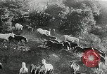 Image of annual wild horse round up Hayward California USA, 1930, second 36 stock footage video 65675032154