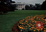 Image of Marigolds in bloom Washington DC USA, 1974, second 9 stock footage video 65675032288