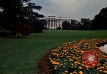 Image of Marigolds in bloom Washington DC USA, 1974, second 10 stock footage video 65675032288