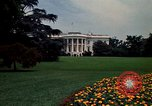 Image of Marigolds in bloom Washington DC USA, 1974, second 21 stock footage video 65675032288
