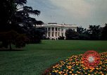 Image of Marigolds in bloom Washington DC USA, 1974, second 22 stock footage video 65675032288