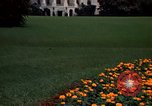 Image of Marigolds in bloom Washington DC USA, 1974, second 51 stock footage video 65675032288