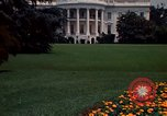 Image of Marigolds in bloom Washington DC USA, 1974, second 52 stock footage video 65675032288