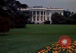 Image of Marigolds in bloom Washington DC USA, 1974, second 53 stock footage video 65675032288