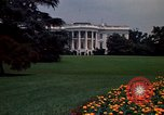 Image of Marigolds in bloom Washington DC USA, 1974, second 54 stock footage video 65675032288