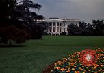 Image of Marigolds in bloom Washington DC USA, 1974, second 55 stock footage video 65675032288