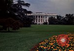 Image of Marigolds in bloom Washington DC USA, 1974, second 59 stock footage video 65675032288