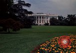 Image of Marigolds in bloom Washington DC USA, 1974, second 60 stock footage video 65675032288