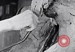 Image of Richmond Barthe designing sculpture New York City USA, 1937, second 55 stock footage video 65675032304