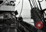 Image of Students studying specimens Sea of Okhotsk, 1947, second 30 stock footage video 65675032348