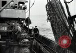 Image of Students studying specimens Sea of Okhotsk, 1947, second 31 stock footage video 65675032348