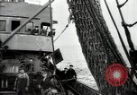 Image of Students studying specimens Sea of Okhotsk, 1947, second 33 stock footage video 65675032348