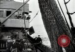 Image of Students studying specimens Sea of Okhotsk, 1947, second 34 stock footage video 65675032348