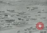 Image of drought United States USA, 1936, second 7 stock footage video 65675032594