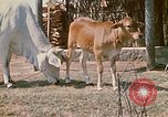 Image of villagers Vietnam, 1970, second 13 stock footage video 65675032671