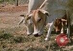 Image of villagers Vietnam, 1970, second 27 stock footage video 65675032671