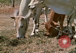 Image of villagers Vietnam, 1970, second 29 stock footage video 65675032671