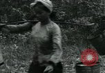 Image of Rural Vietnamese tapping rubber trees Vietnam, 1965, second 37 stock footage video 65675032688