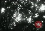 Image of Rural Vietnamese tapping rubber trees Vietnam, 1965, second 46 stock footage video 65675032688