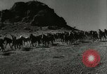 Image of Roundup of wild horses United States USA, 1943, second 2 stock footage video 65675032777