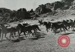 Image of Roundup of wild horses United States USA, 1943, second 4 stock footage video 65675032777
