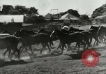 Image of Roundup of wild horses United States USA, 1943, second 6 stock footage video 65675032777