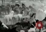 Image of Roundup of wild horses United States USA, 1943, second 10 stock footage video 65675032777