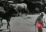 Image of Roundup of wild horses United States USA, 1943, second 18 stock footage video 65675032777