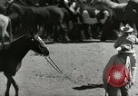 Image of Roundup of wild horses United States USA, 1943, second 19 stock footage video 65675032777