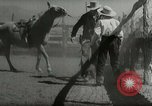 Image of Roundup of wild horses United States USA, 1943, second 34 stock footage video 65675032777