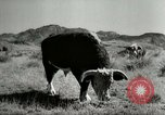 Image of Roundup of wild horses United States USA, 1943, second 61 stock footage video 65675032777