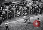 Image of rodeo Houston Texas USA, 1966, second 21 stock footage video 65675032846