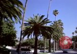 Image of Palm tree lined street in neighborhood Los Angeles California USA, 1976, second 20 stock footage video 65675033263