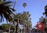Image of Palm tree lined street in neighborhood Los Angeles California USA, 1976, second 21 stock footage video 65675033263