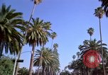 Image of Palm tree lined street in neighborhood Los Angeles California USA, 1976, second 22 stock footage video 65675033263