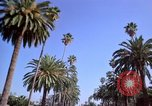 Image of Palm tree lined street in neighborhood Los Angeles California USA, 1976, second 23 stock footage video 65675033263