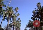 Image of Palm tree lined street in neighborhood Los Angeles California USA, 1976, second 25 stock footage video 65675033263